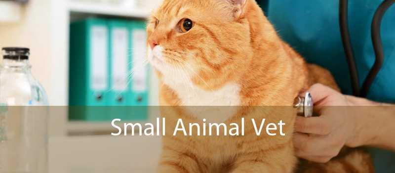 Small Animal Vet