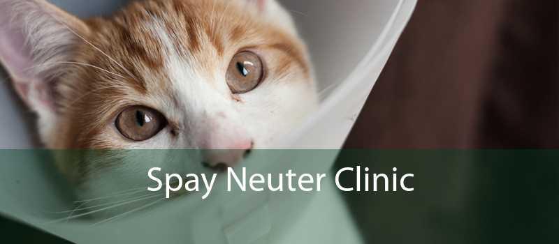 Spay Neuter Clinic