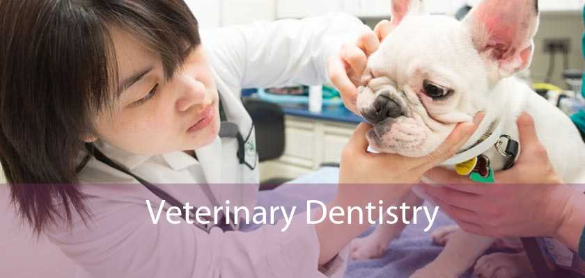 Veterinary Dentistry