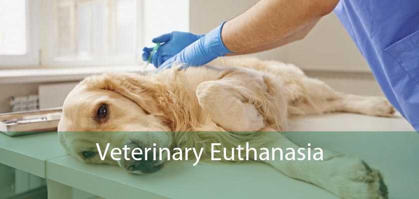 Veterinary Euthanasia